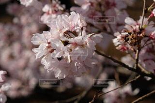 春のささやきの写真・画像素材[3949378]