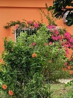 南国の花園の写真・画像素材[3954439]
