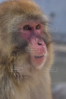 猿のクローズアップの写真・画像素材[3869969]