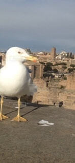 砂の中に立っている鳥の写真・画像素材[3870641]