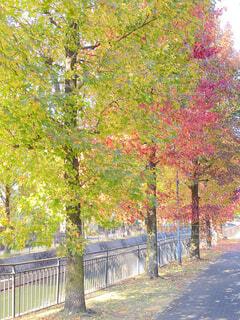 色づき始めた木々の写真・画像素材[3874435]