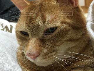 猫の写真・画像素材[162556]