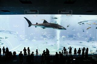 美ら海水族館の写真・画像素材[3914709]