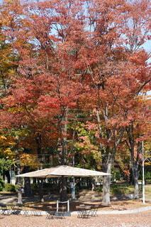 秋の色付きの写真・画像素材[3880657]