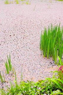 桜の花びらの写真・画像素材[3915118]