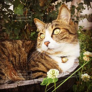 猫の写真・画像素材[162719]