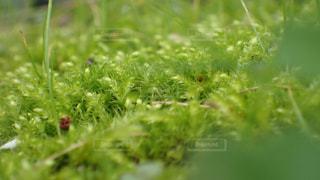 近くの緑の植物をの写真・画像素材[1542989]