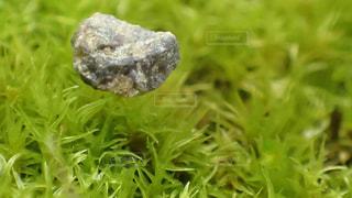 苔と浮いて見える小石の写真・画像素材[1542990]