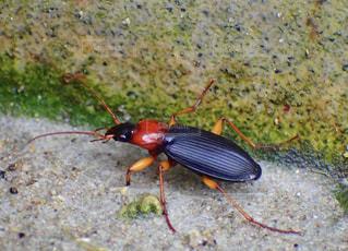 昆虫の写真・画像素材[1573513]