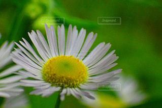 草花の写真・画像素材[1573515]