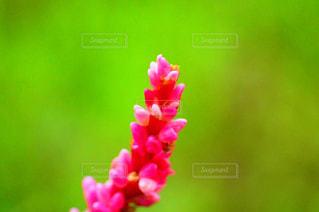 草花の写真・画像素材[1573517]