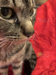 猫の接写の写真・画像素材[2206303]