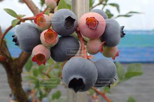 果樹のクローズアップの写真・画像素材[2267889]