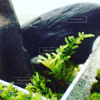 植物のクローズアップの写真・画像素材[2267920]