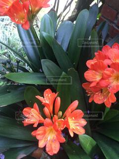 オレンジのお花の写真・画像素材[4280887]