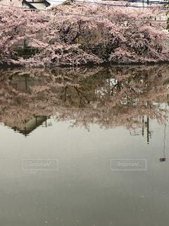 風景 - No.444597