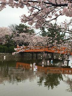 風景 - No.444598
