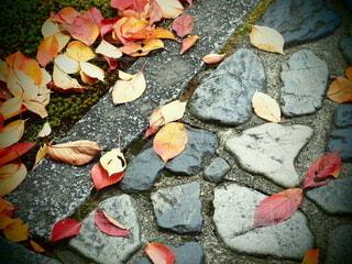 落ち葉と石畳の写真・画像素材[3911408]