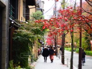紅葉と歩く人物の写真・画像素材[3911481]