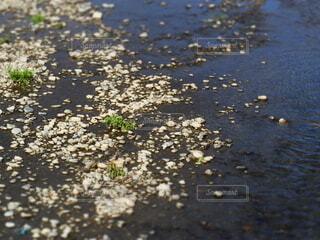 川の水面と石の写真・画像素材[3911507]