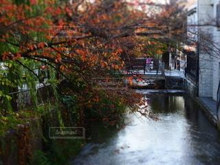川沿いの紅葉の写真・画像素材[3911522]