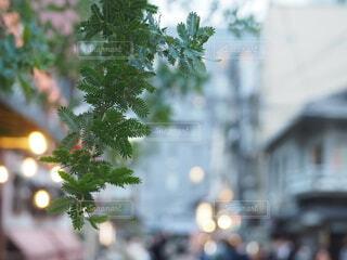 街中の緑の写真・画像素材[3914691]