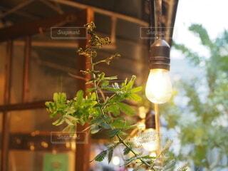 街中の緑とランプの写真・画像素材[3914697]