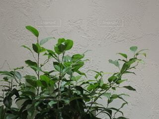 白い壁と植物の写真・画像素材[3914703]