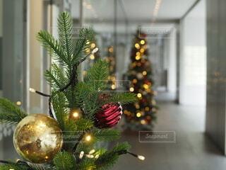 街中のクリスマスツリーの写真・画像素材[3919052]