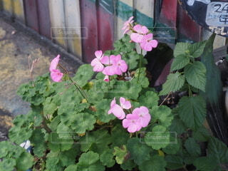 庭先の花の写真・画像素材[3919228]
