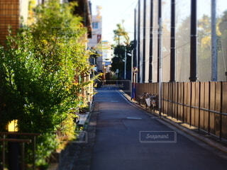 夕刻の住宅街の写真・画像素材[3919308]