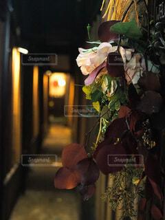 ライトに照らされた花の写真・画像素材[3919335]