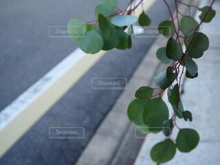 街中の植物の写真・画像素材[3919379]