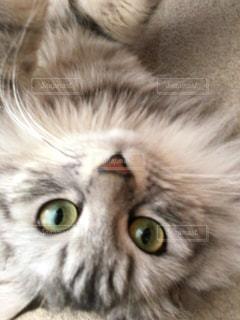 猫の写真・画像素材[162952]
