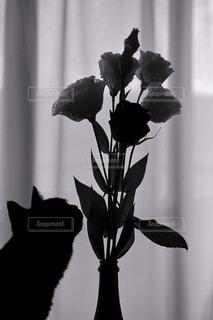 窓辺に飾った花に興味津々の黒猫の写真・画像素材[3888722]