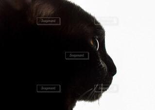 何かを無心に見つめる黒猫の横顔の写真・画像素材[3895028]