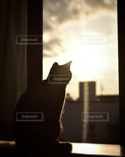 窓辺で朝陽を浴びる猫の写真・画像素材[3901952]