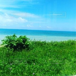 小浜島の海の写真・画像素材[3893071]
