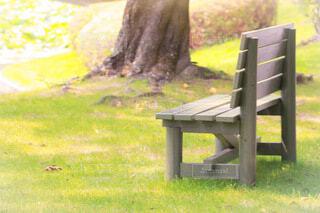 草地のベンチの写真・画像素材[3894075]