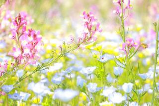 カラフルな春の花クローズアップの写真・画像素材[4349922]