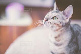 猫のクローズアップの写真・画像素材[4083496]