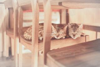 木の椅子の上で寝ている猫の写真・画像素材[4175507]