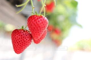 果物のクローズアップの写真・画像素材[3892865]