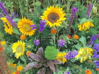 花の写真・画像素材[163311]