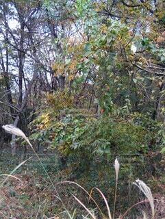 木にまとわる蔓植物の写真・画像素材[3896369]