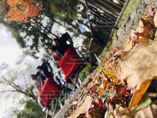 人力車で紅葉を楽しむ夫婦たちの写真・画像素材[3917763]