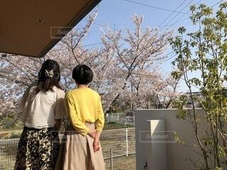 桜のお花見の写真・画像素材[3985486]