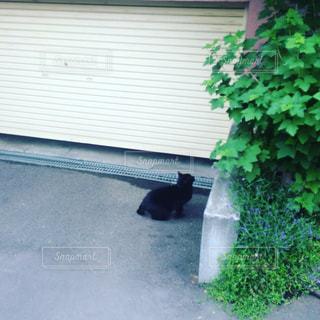 猫の写真・画像素材[163455]