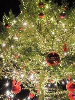 クリスマスツリーの写真・画像素材[3952582]
