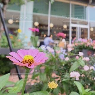 市役所のカフェテラスに咲く花達の写真・画像素材[4629151]